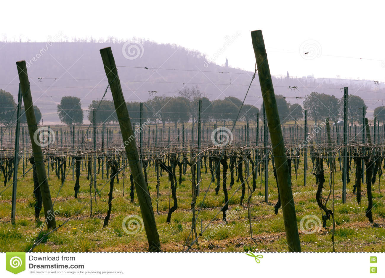 Vineyard italian fields wine