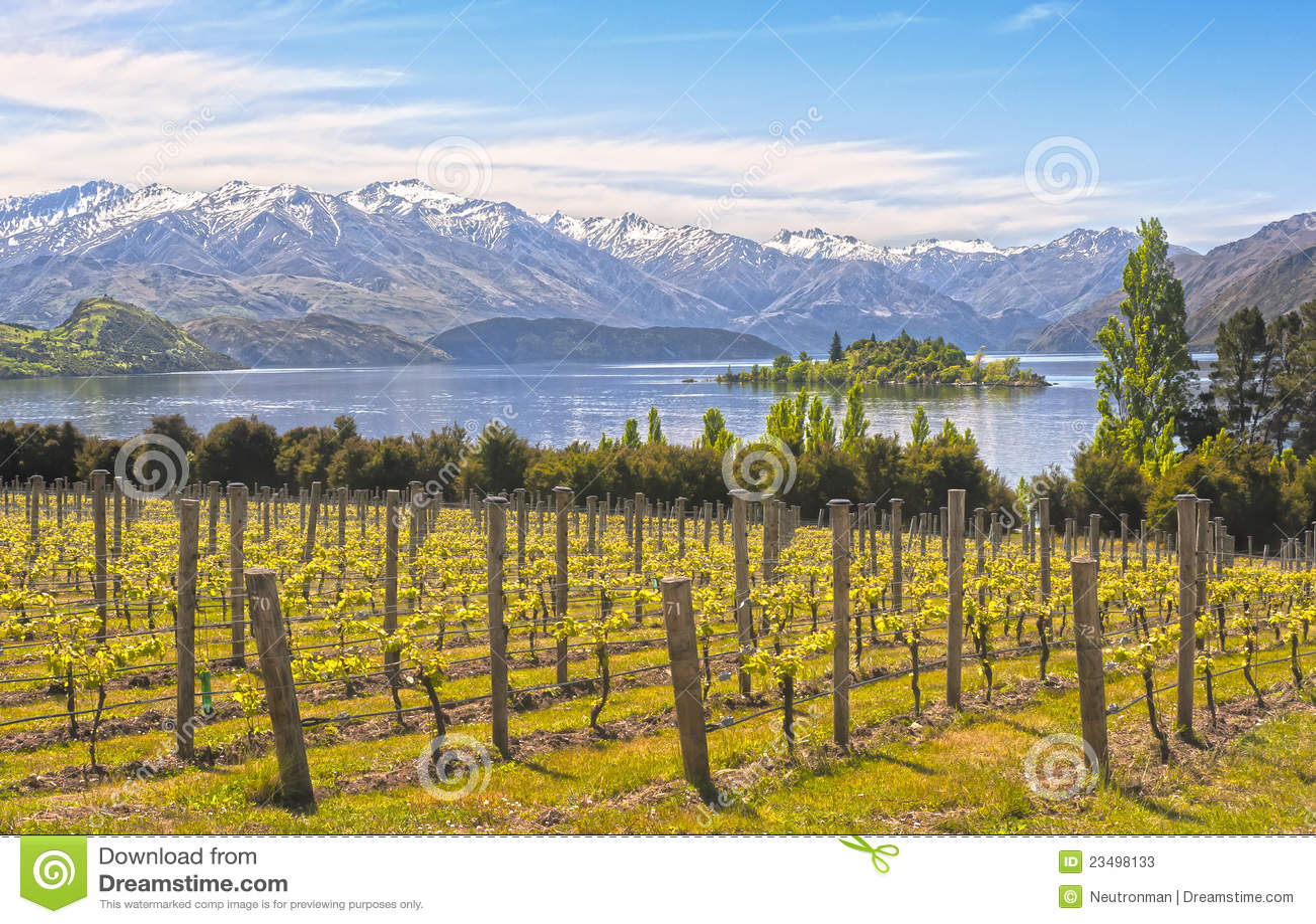 Vineyard on the lake - New Zealand