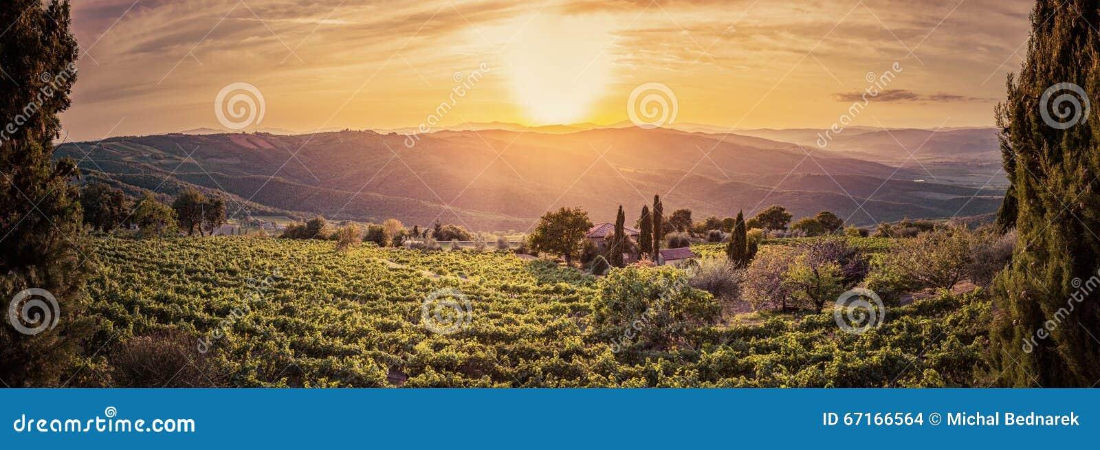 Vineyard landscape panorama in Tuscany, Italy. Wine farm at sunset