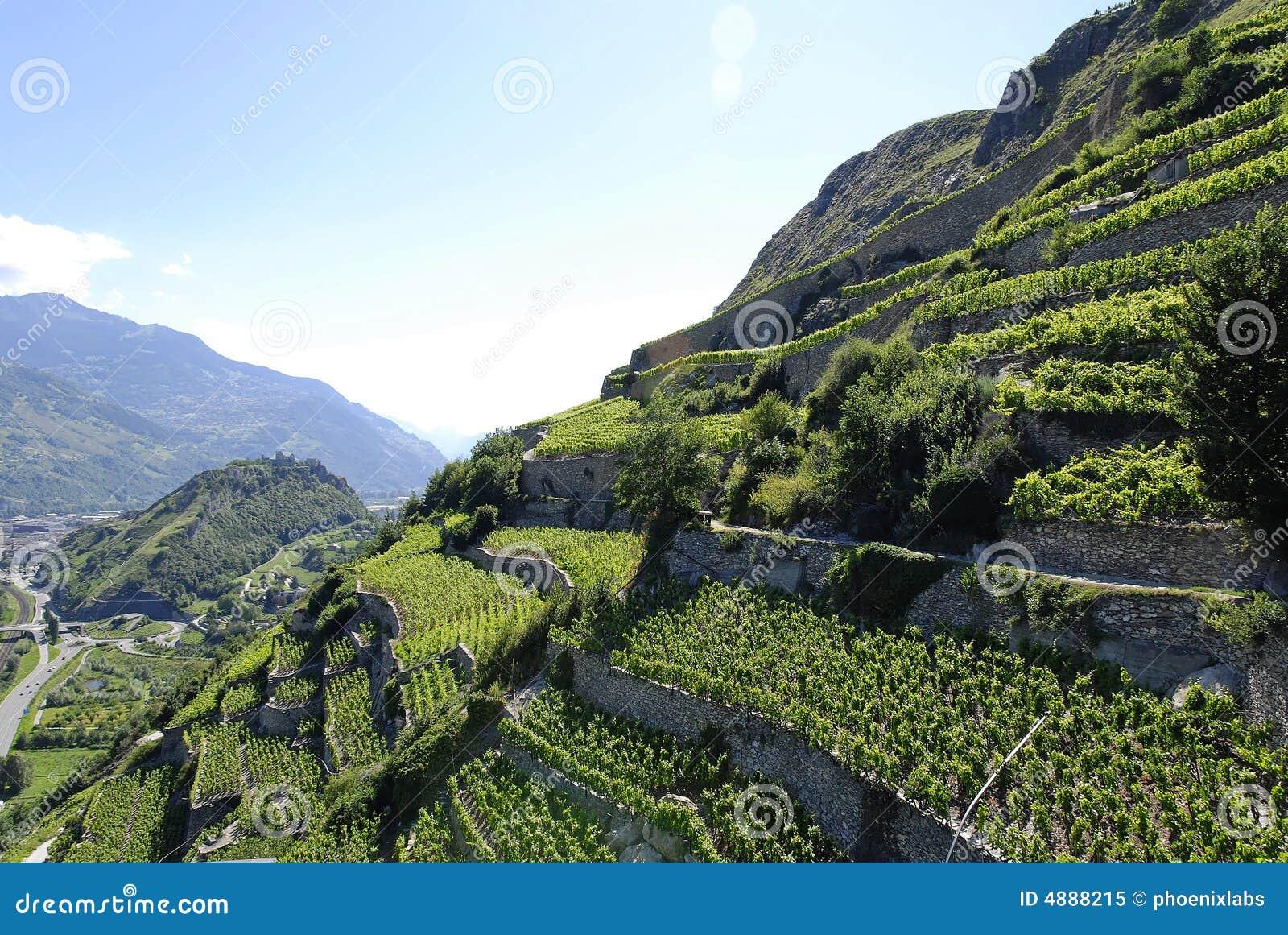 Vineyard Mountainside