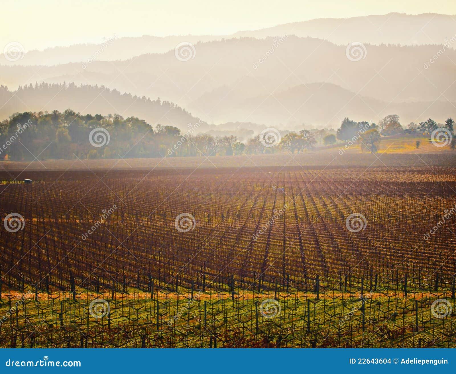 Vineyard, Napa Valley Wine Country, California