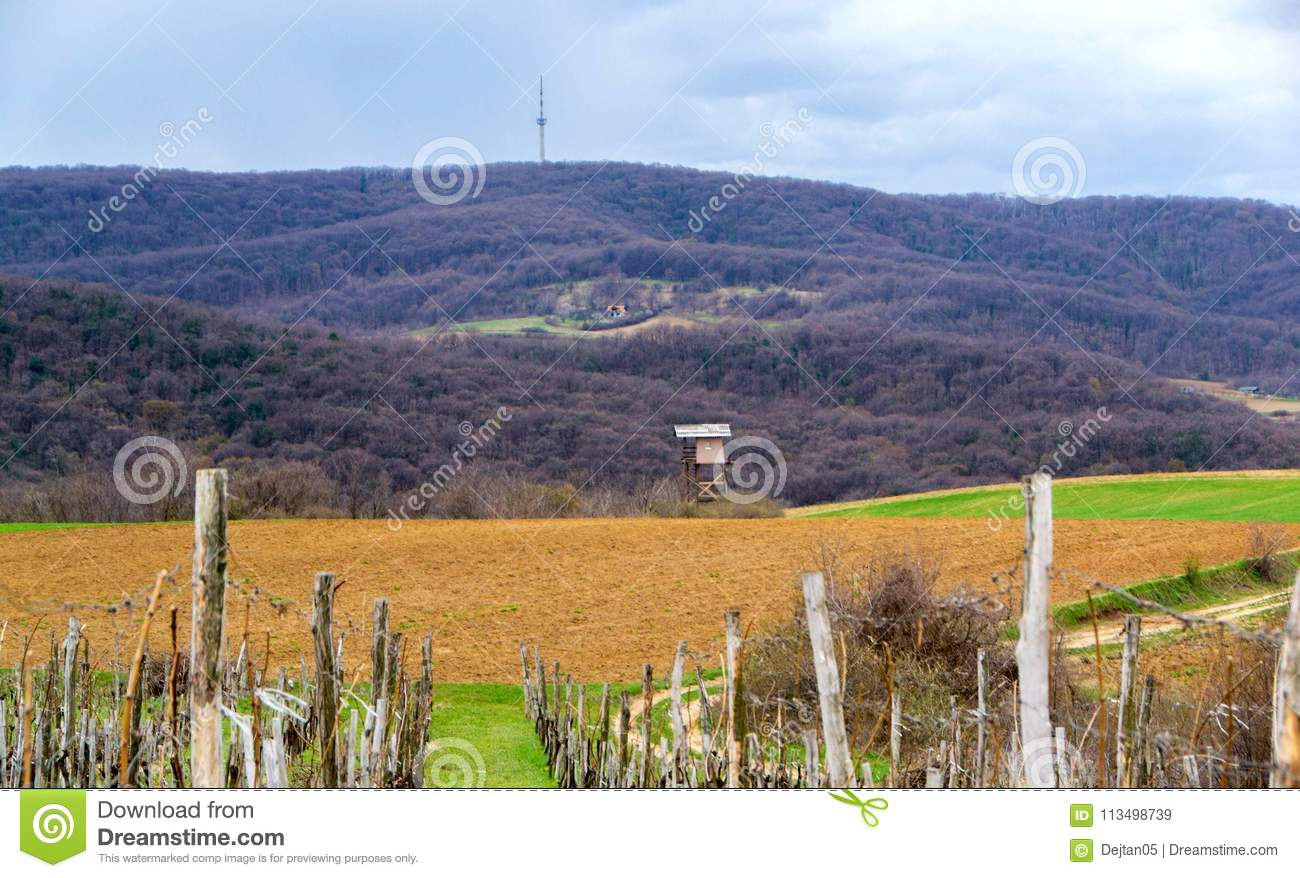 Vineyard surrounded by agricultural fields