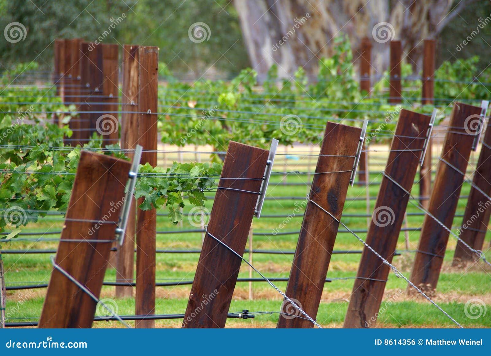 Vineyard Trellis Stock Photo Image Of Tourism Winery