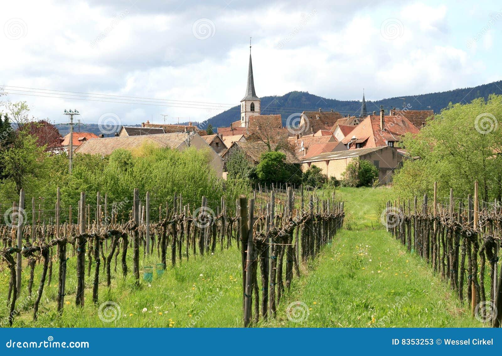 http://thumbs.dreamstime.com/z/vineyard-village-mittelbergheim-france-8353253.jpg