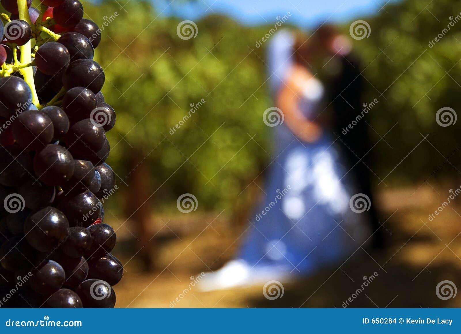 Vineyard wedding I