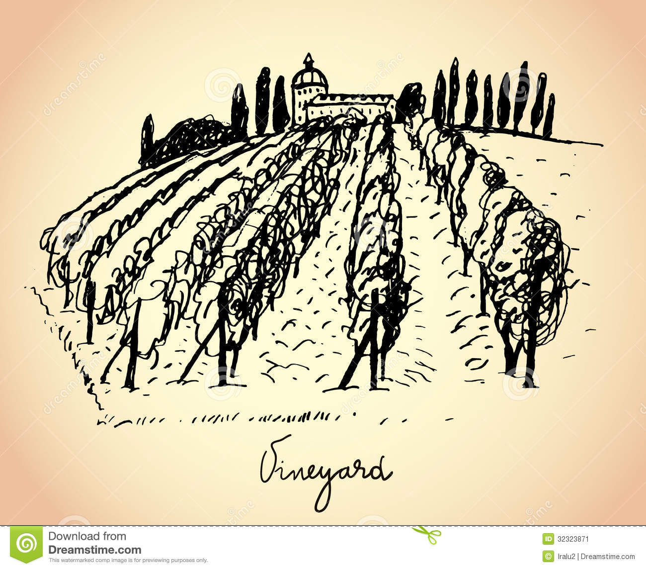 Vineyard Wine Grape Illustration
