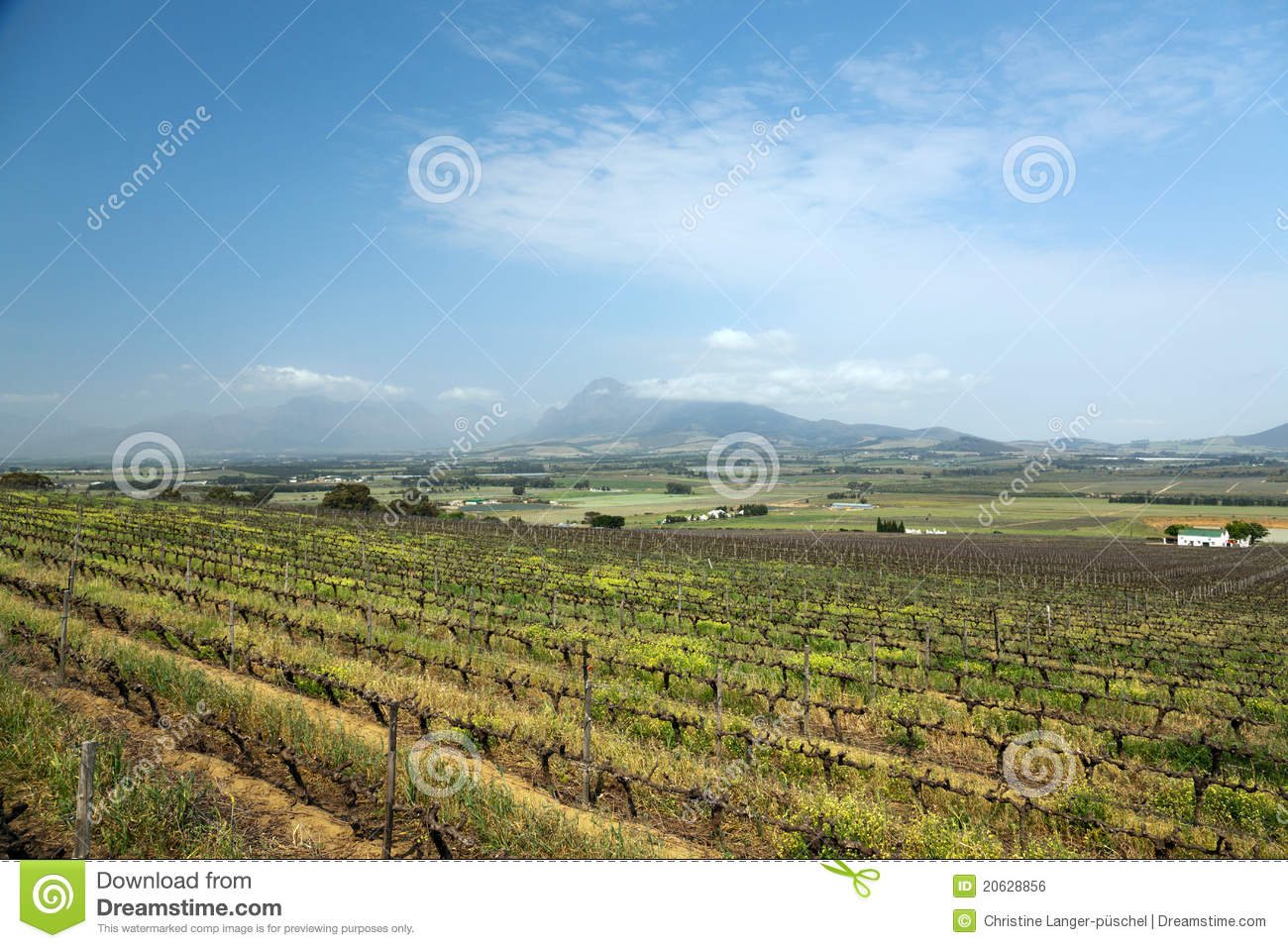 Vineyard or winery in south africa stock photo image for Jardin winery south africa