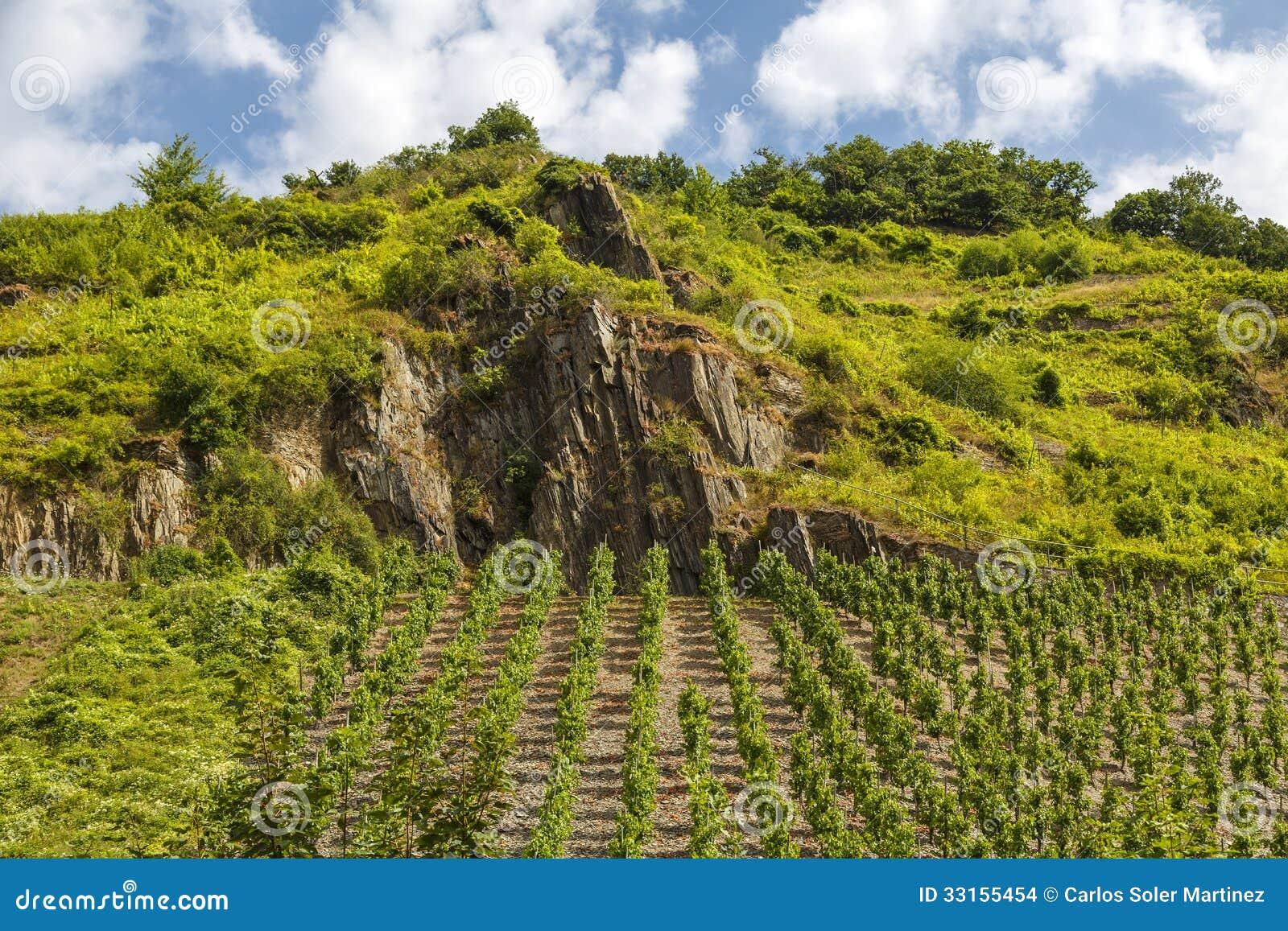 Vineyards Beilstein