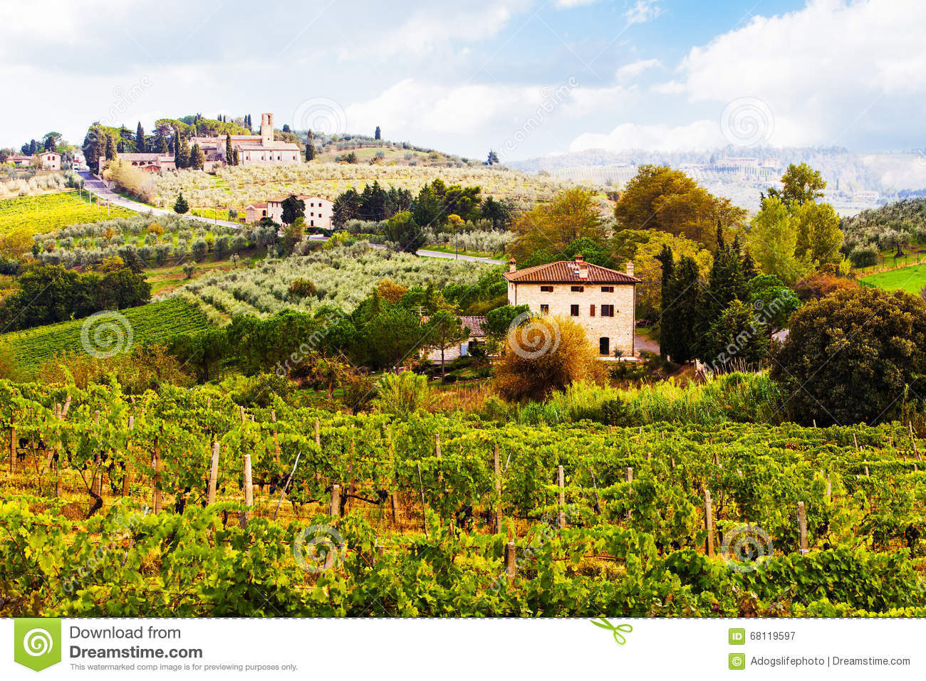 Vineyards In Countryside Of Tuscany Italy Stock Image ...