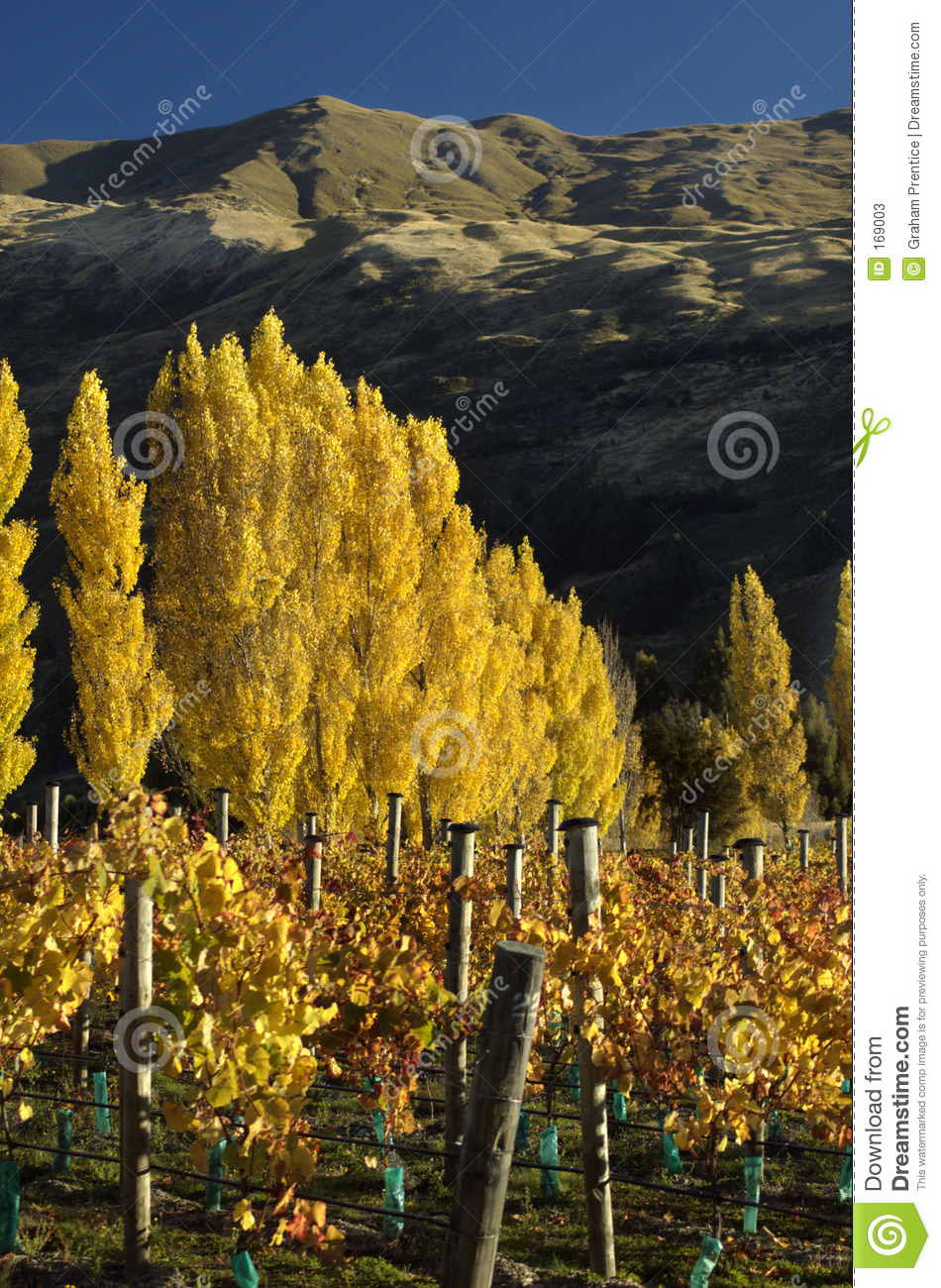 Vineyards in Fall