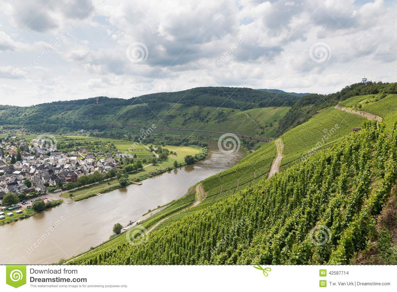 Vineyards in Germany along river Moselle near Punderich