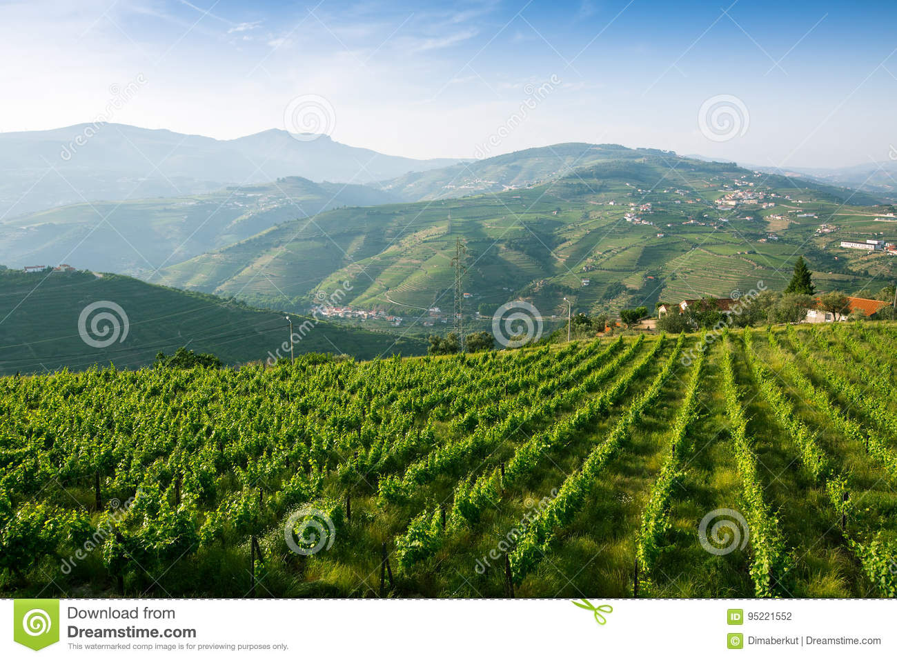 Vineyards on the green hills. Douro Valley