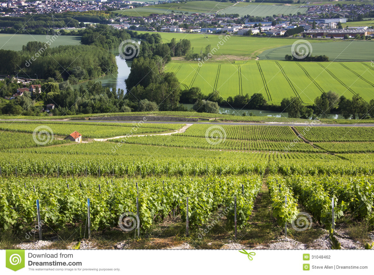 vineyards hautvillers near reims france stock photo image of scenic entrepot 31048462. Black Bedroom Furniture Sets. Home Design Ideas