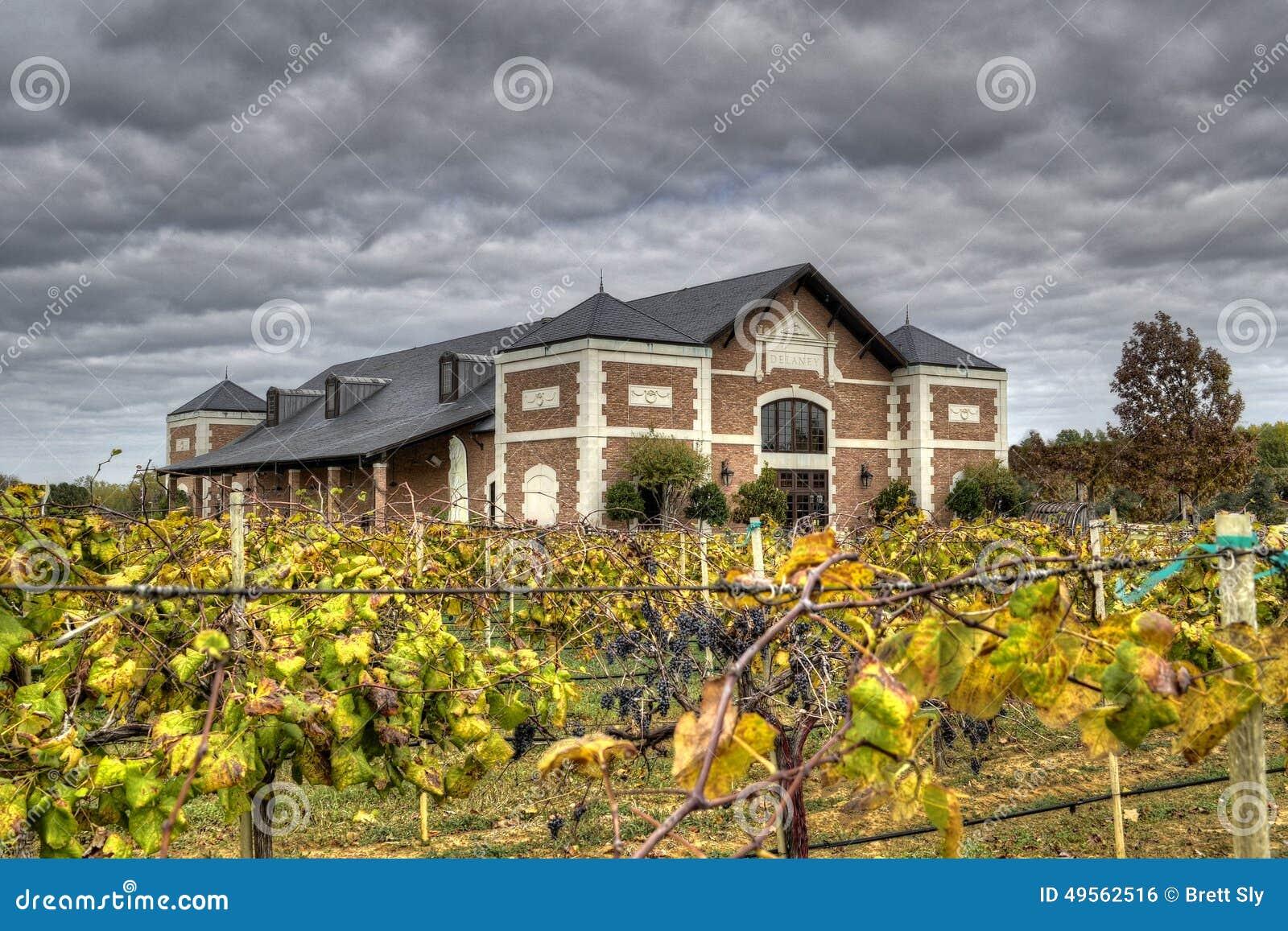 Vineyards HDR