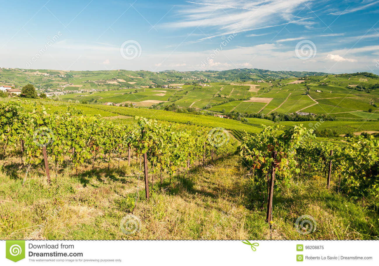 Vineyards in the hills of Oltrepo& x27; Pavese, near Pavia