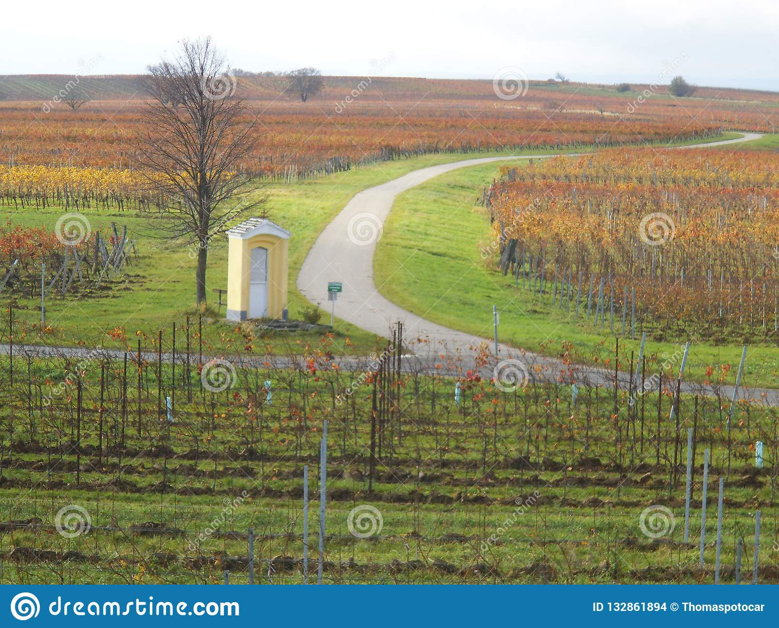 Beautiful Vineyards in Lutzmannsburg with streets.