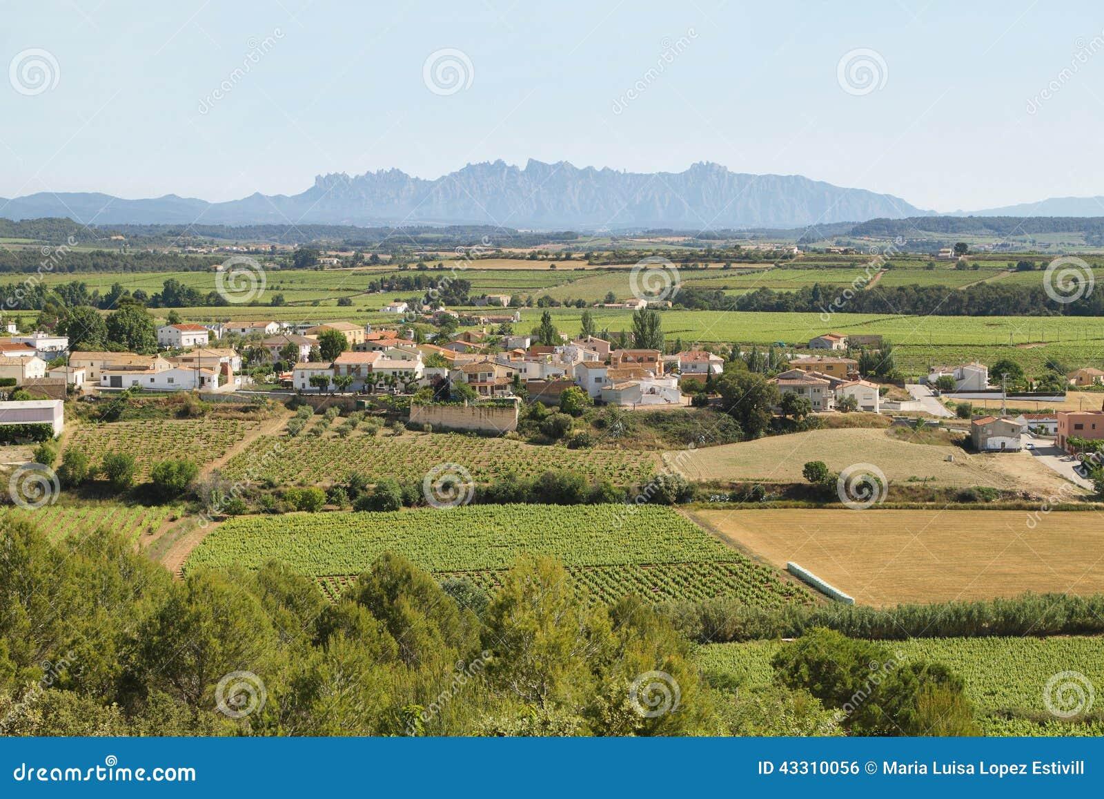 Vineyards with Montserrat peaks at background