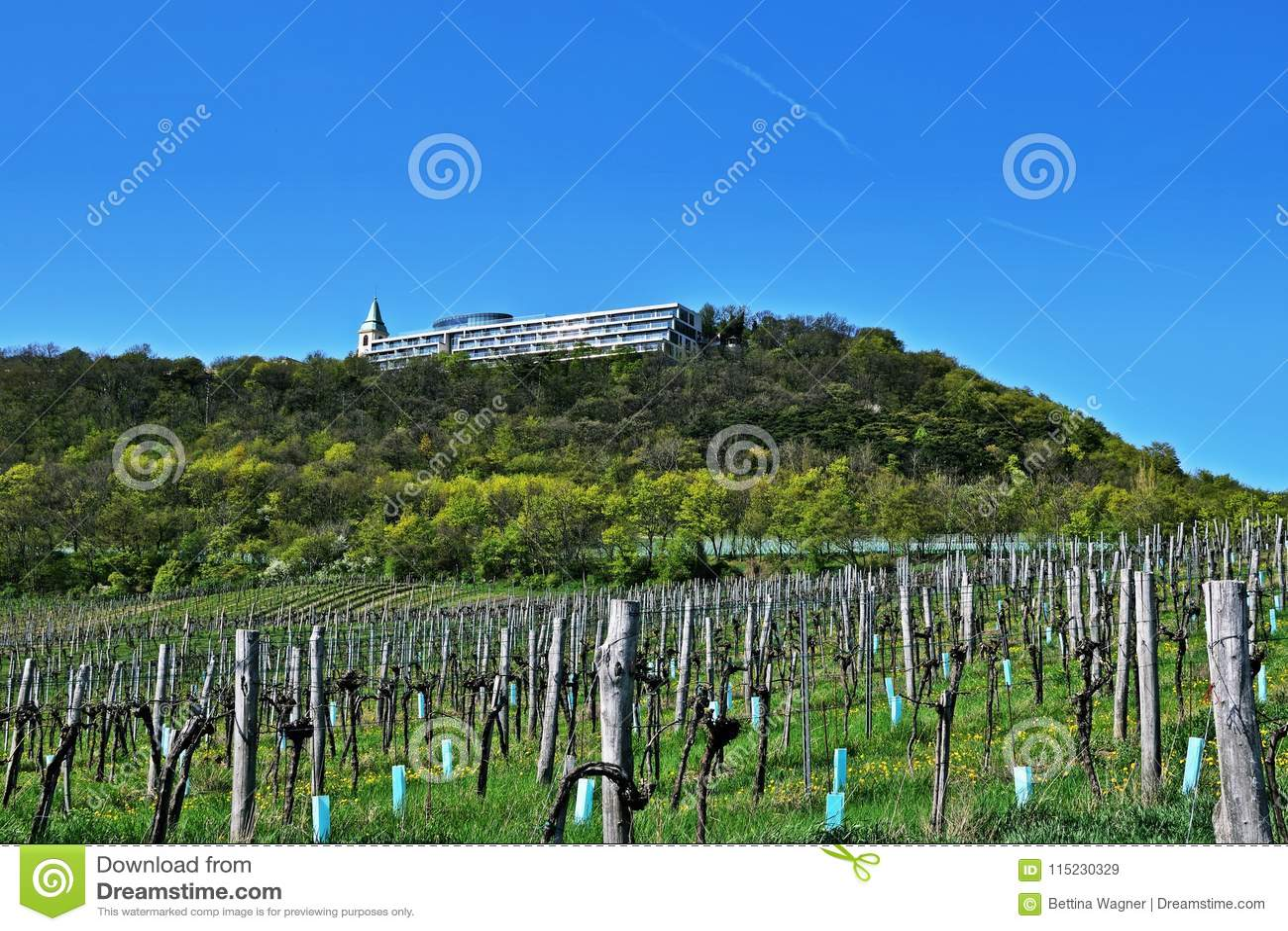 Vineyards Near Kahlenberg Wien Stock Image Image Of Color Hill
