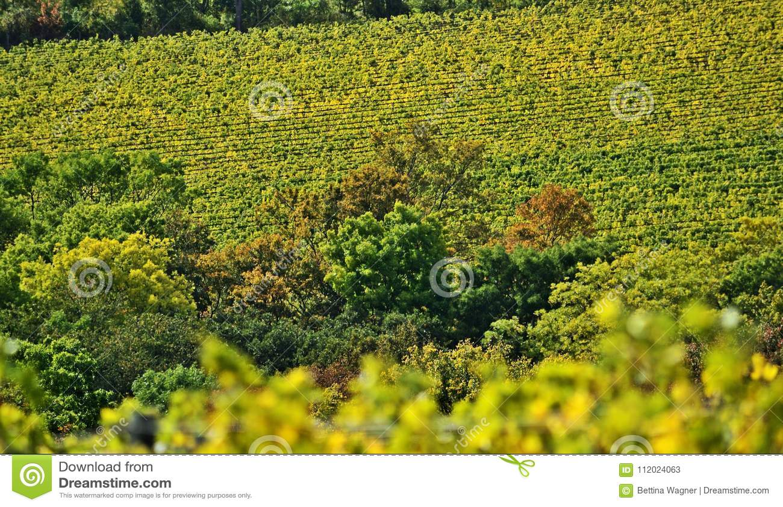 Vineyards Near Kahlenberg Wien Stock Image Image Of European