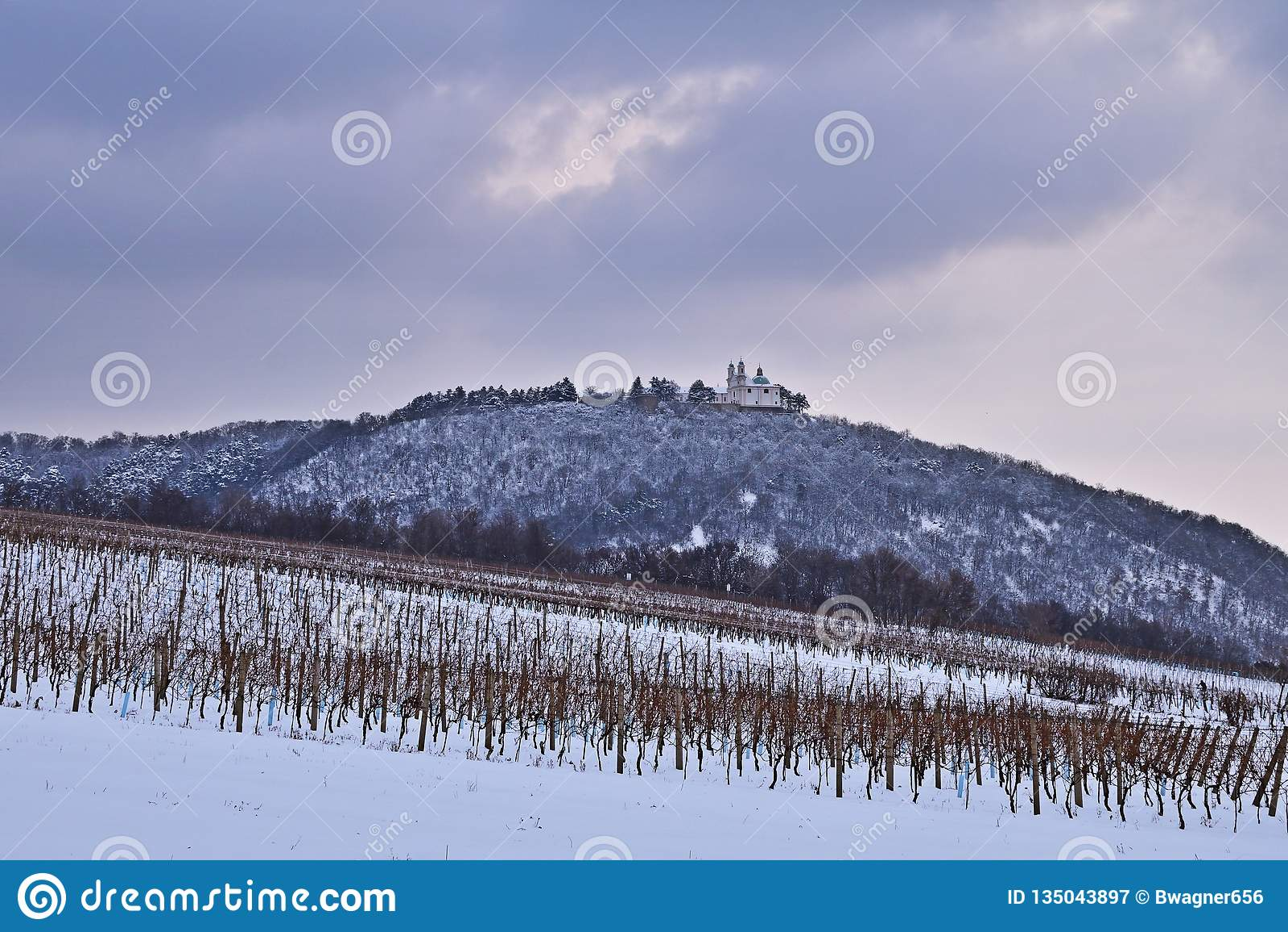 Vineyards near Vienna, Austria in winter