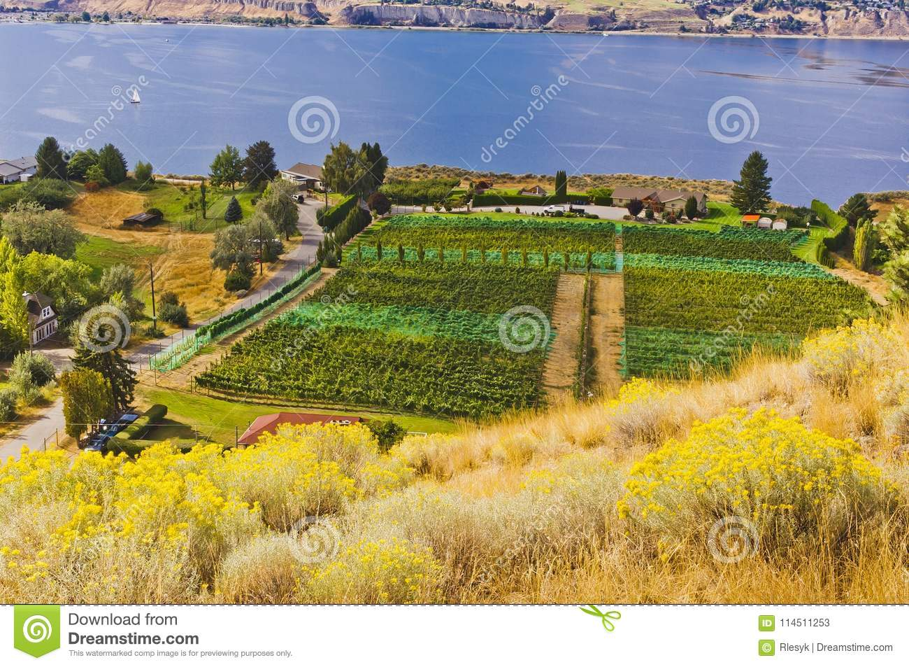 Vineyards With Protective Netting Stock Image - Image of