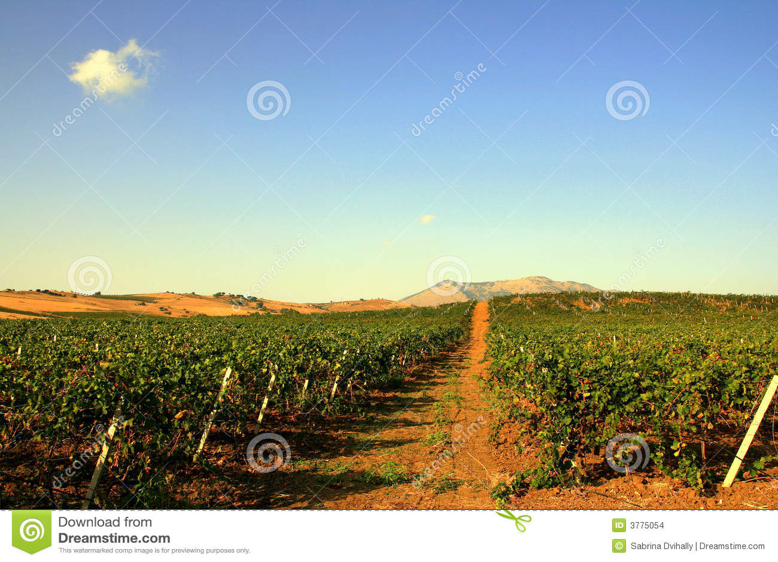 Vineyards & Sky, Sicily