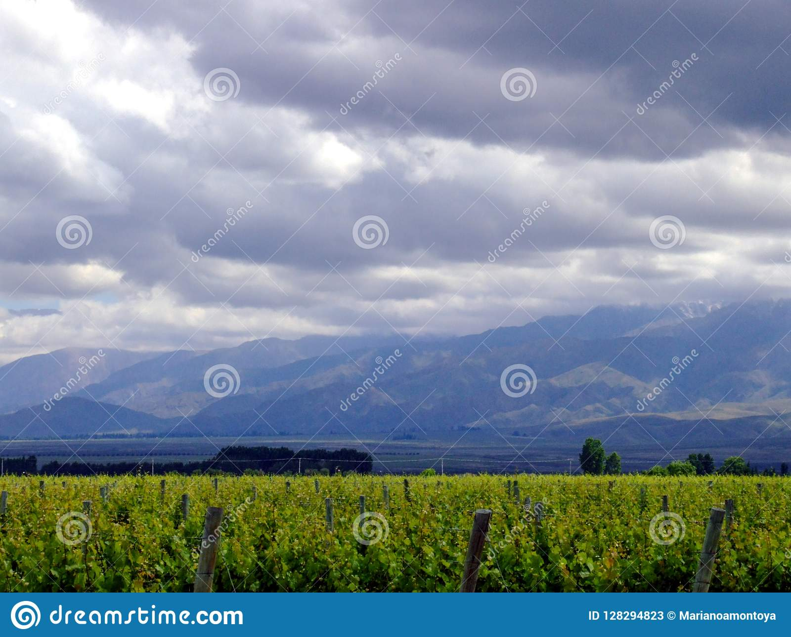 Vineyards and sky