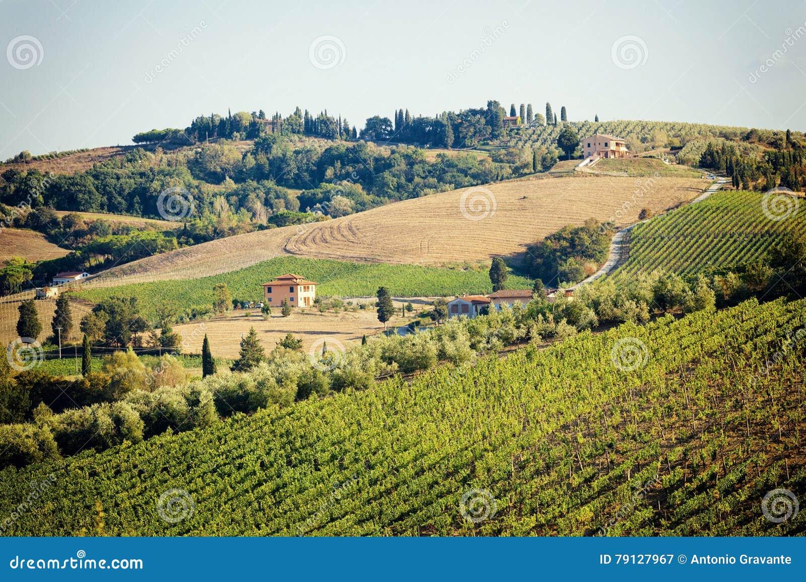 Vineyards with stone house, Tuscany, Italy