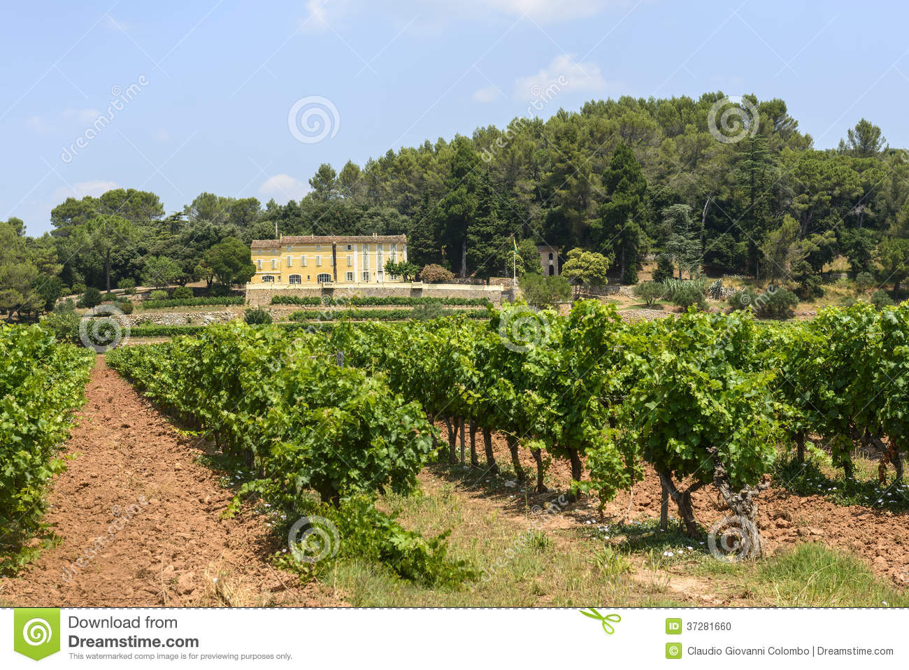 Vineyards In Var Provence Stock Photo Image 37281660