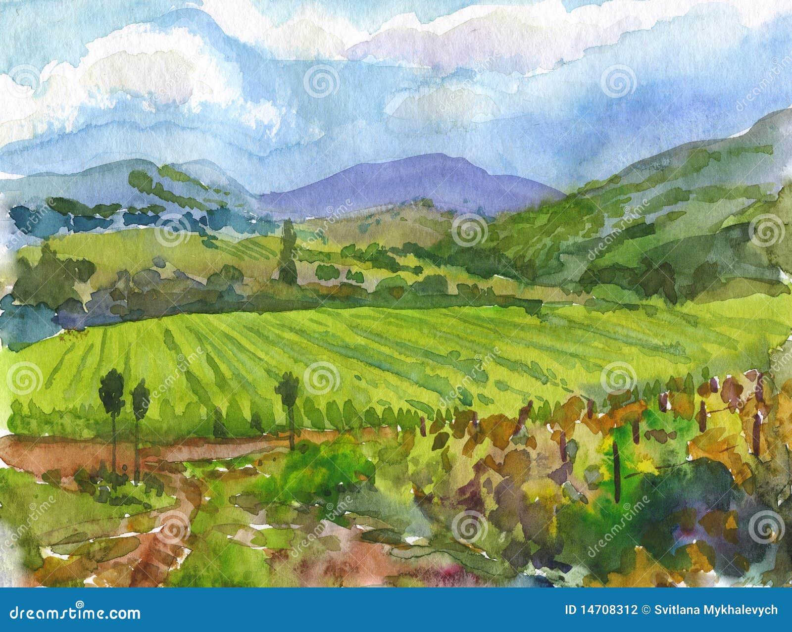 vineyards watercolor stock illustration illustration of