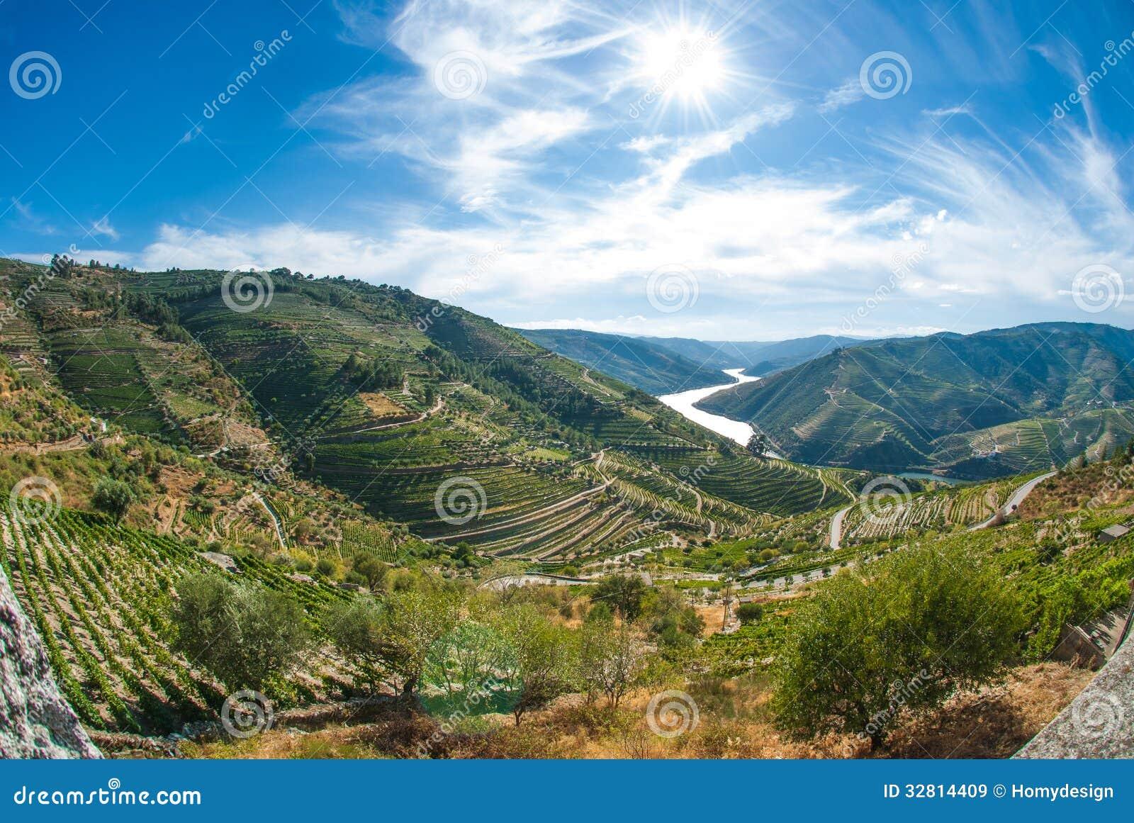 Vineyars no vale de Douro