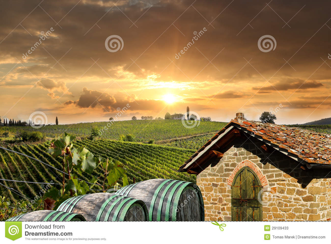 Vineyeard in Chianti, Tuscany, Italy, famous lands
