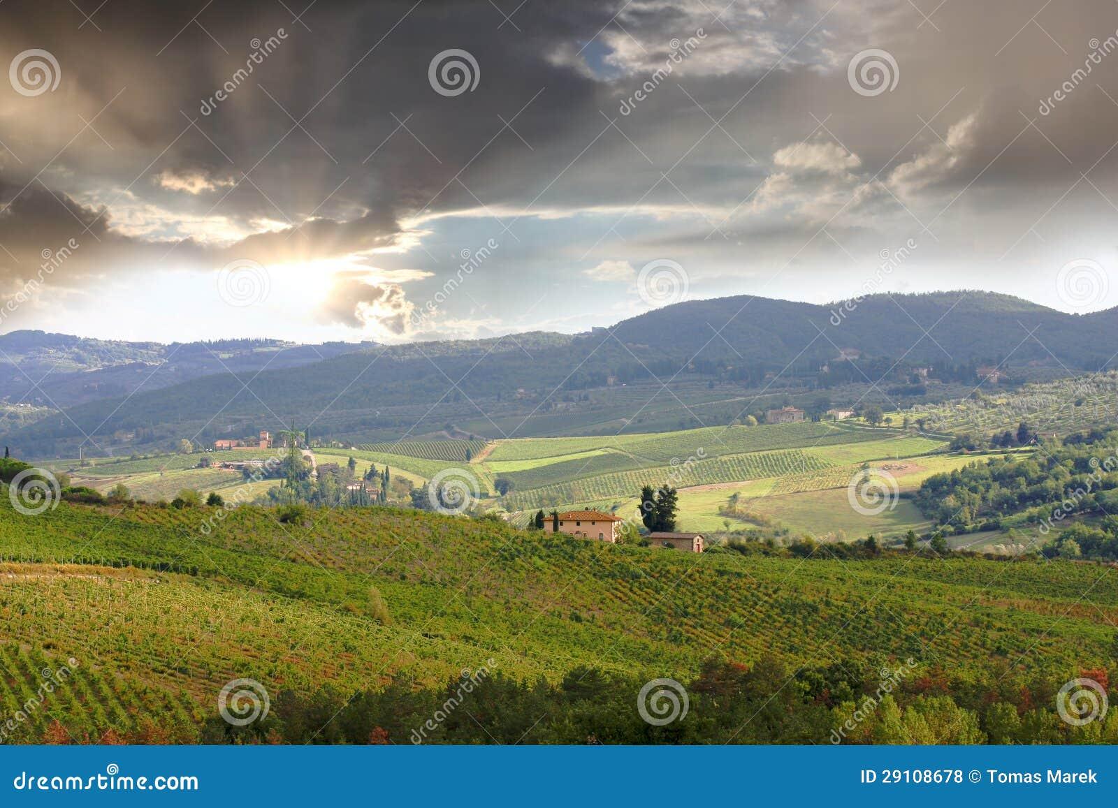 Vineyeard dans Chianti, Toscane, Italie, cordons célèbres