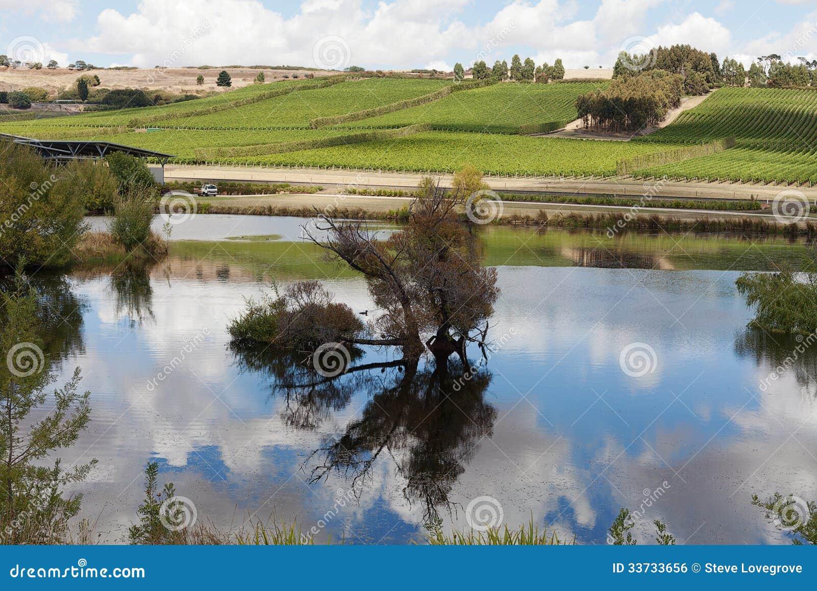 Vingård Tasmanien