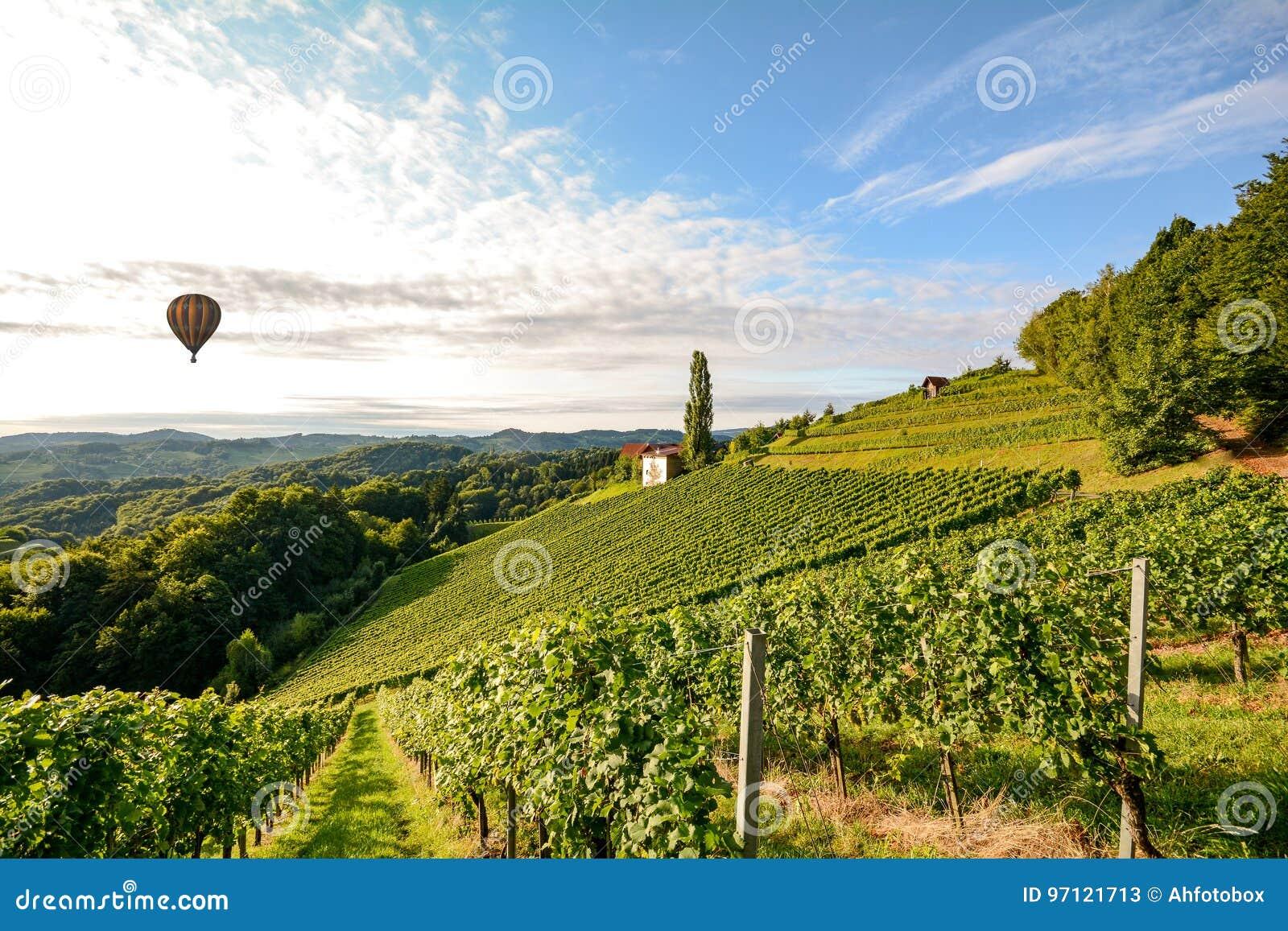 Vingårdar med ballongen för varm luft nära en vinodling för skörden i det växande området för tuscany vin, Italien