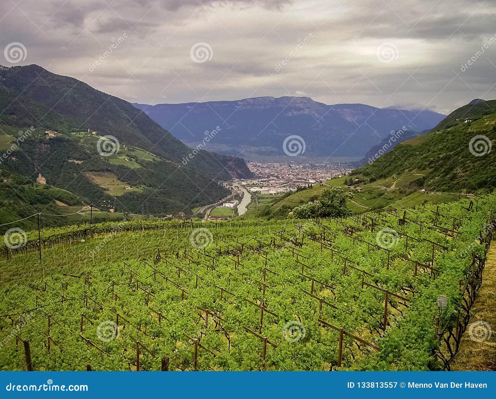 Vingårdar nästan staden av Bolzano i dolomitesna, Italien