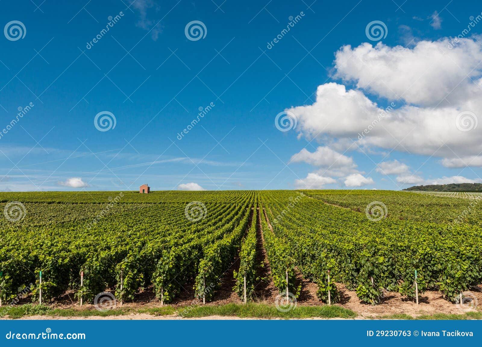 Download Vinhedo em France imagem de stock. Imagem de campo, verde - 29230763