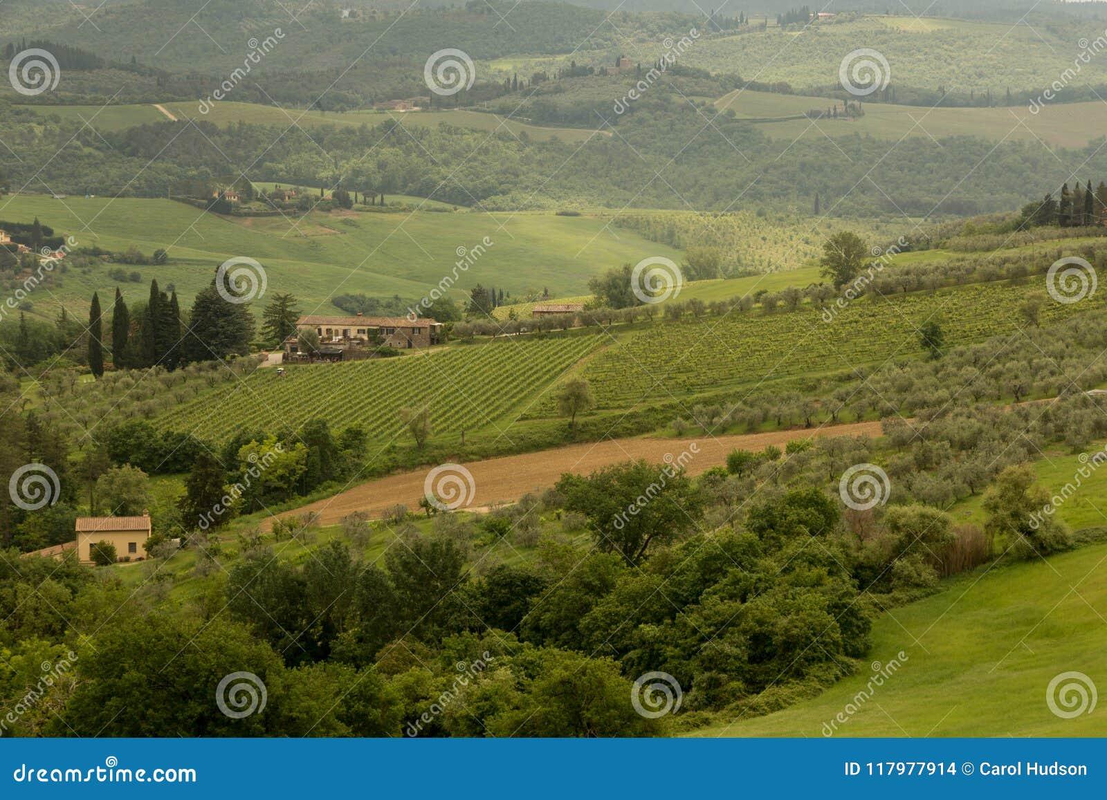 Vinhedos e bosques verde-oliva em um montanhês de Tuscan