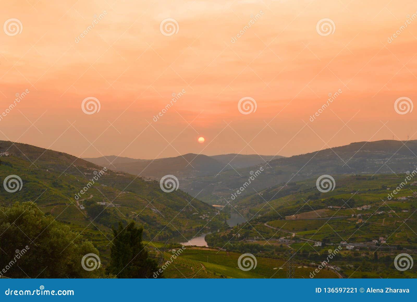 Vinhedos no Douro River Valley entre Peso de Regua e Pinhao, Portugal