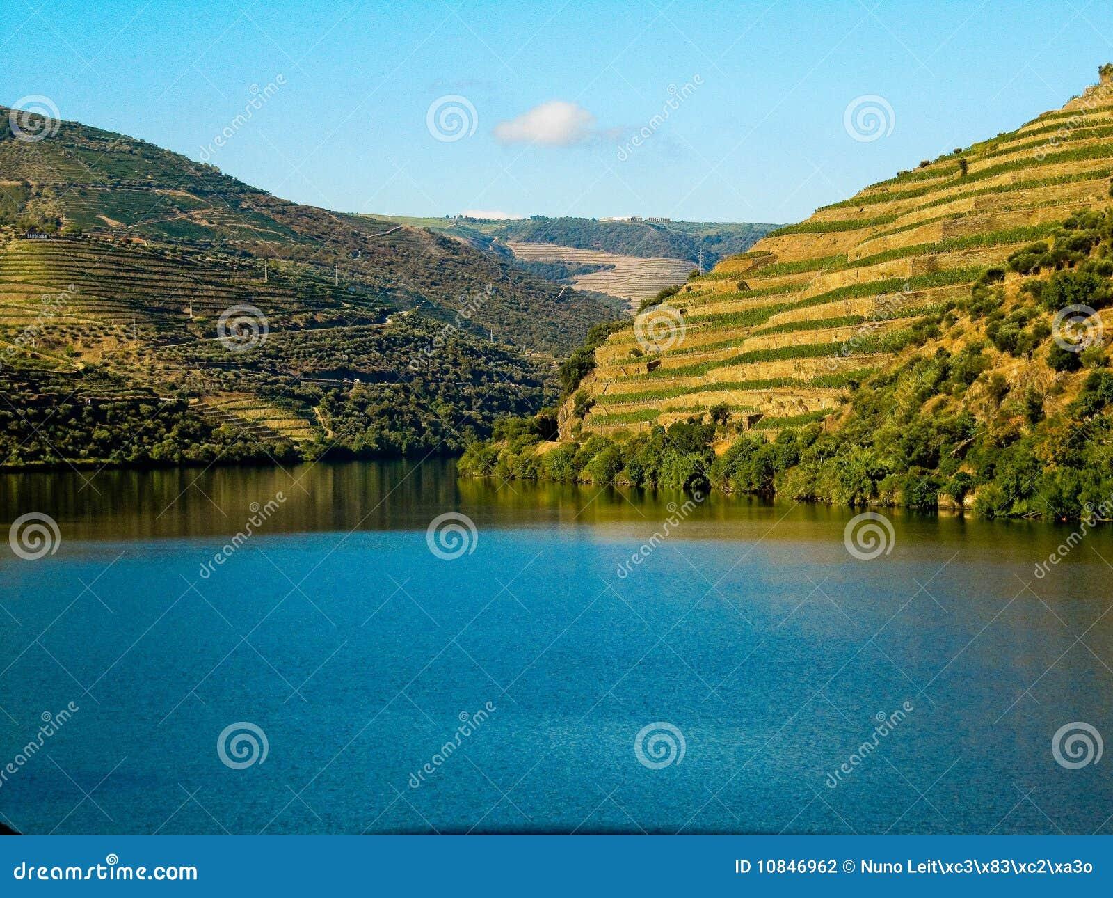 Vinhedos pelo rio Porto do douro