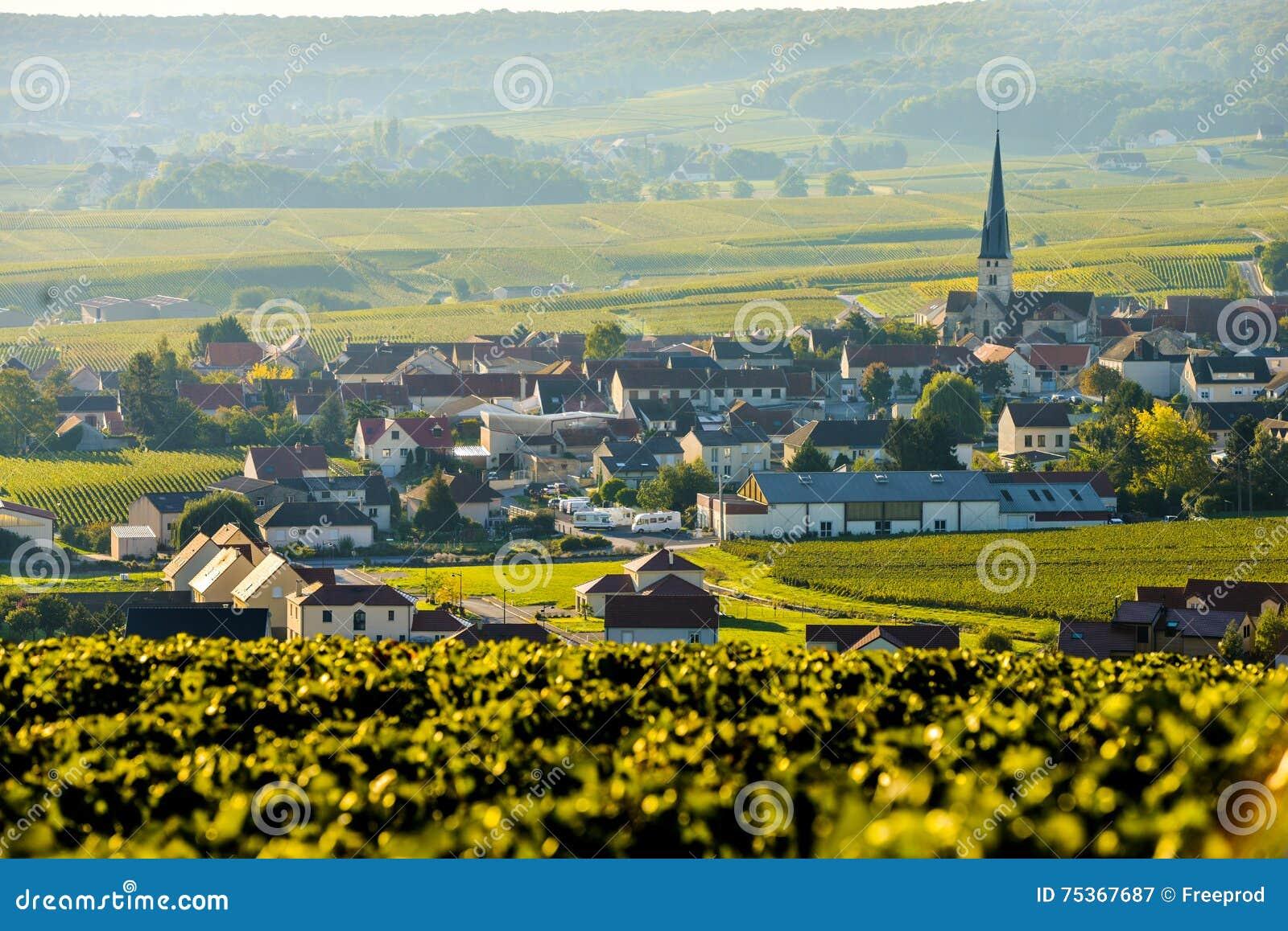 Vinhedos Sermiers de Champagne no departamento de Marne, França