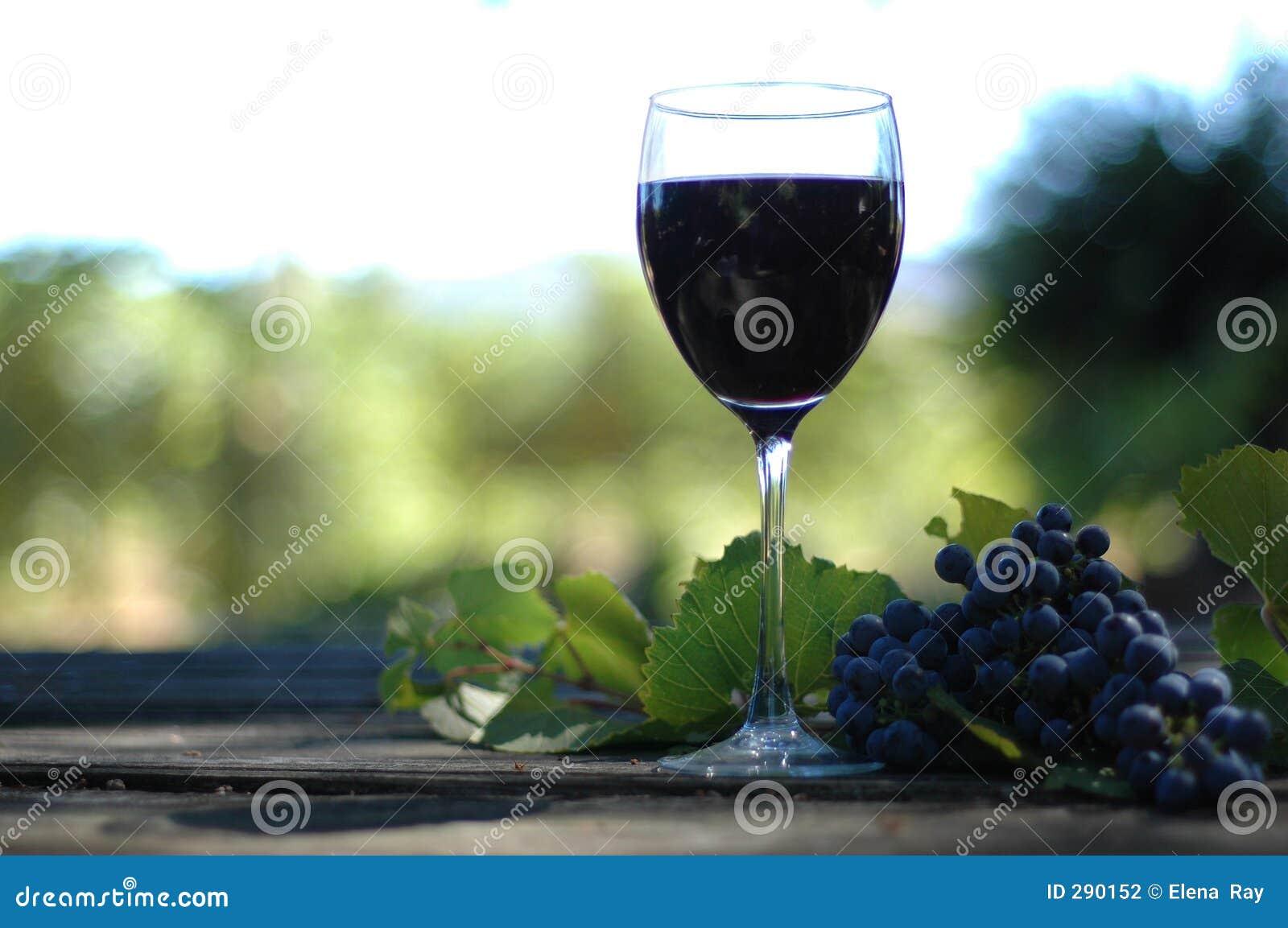 Vino виноградника