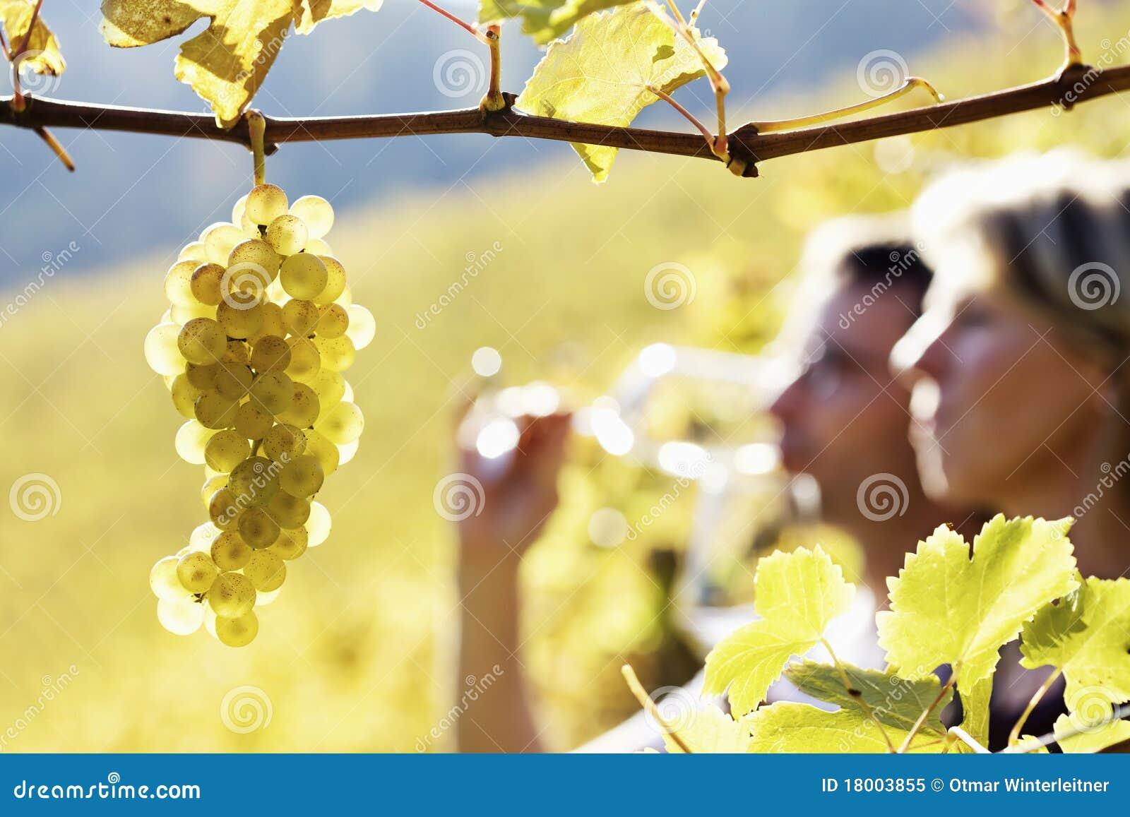 Vino de la prueba de los pares en viñedo