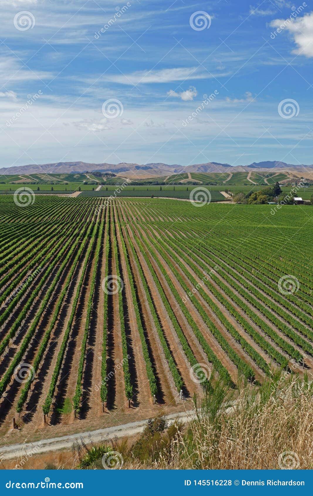 Vinos finos de un vi?edo en Nueva Zelanda