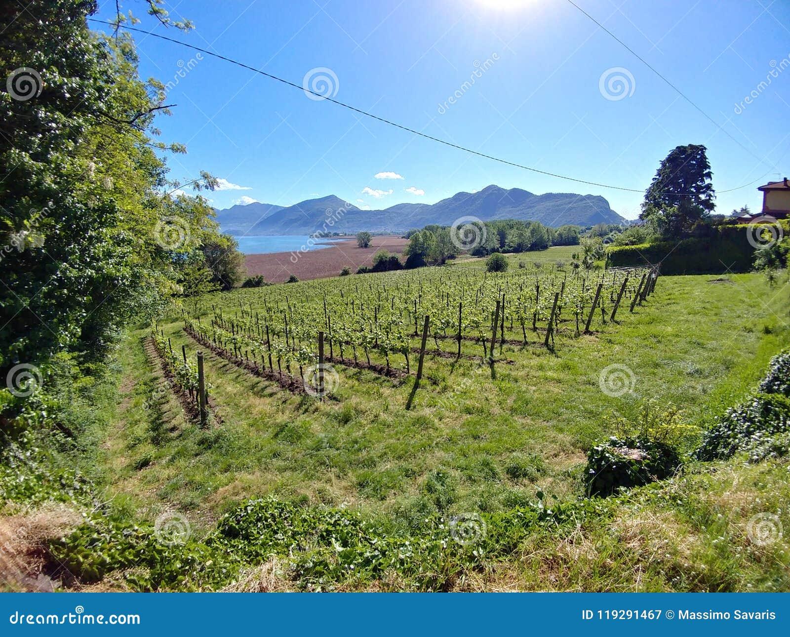 Vinranka i franciacorta