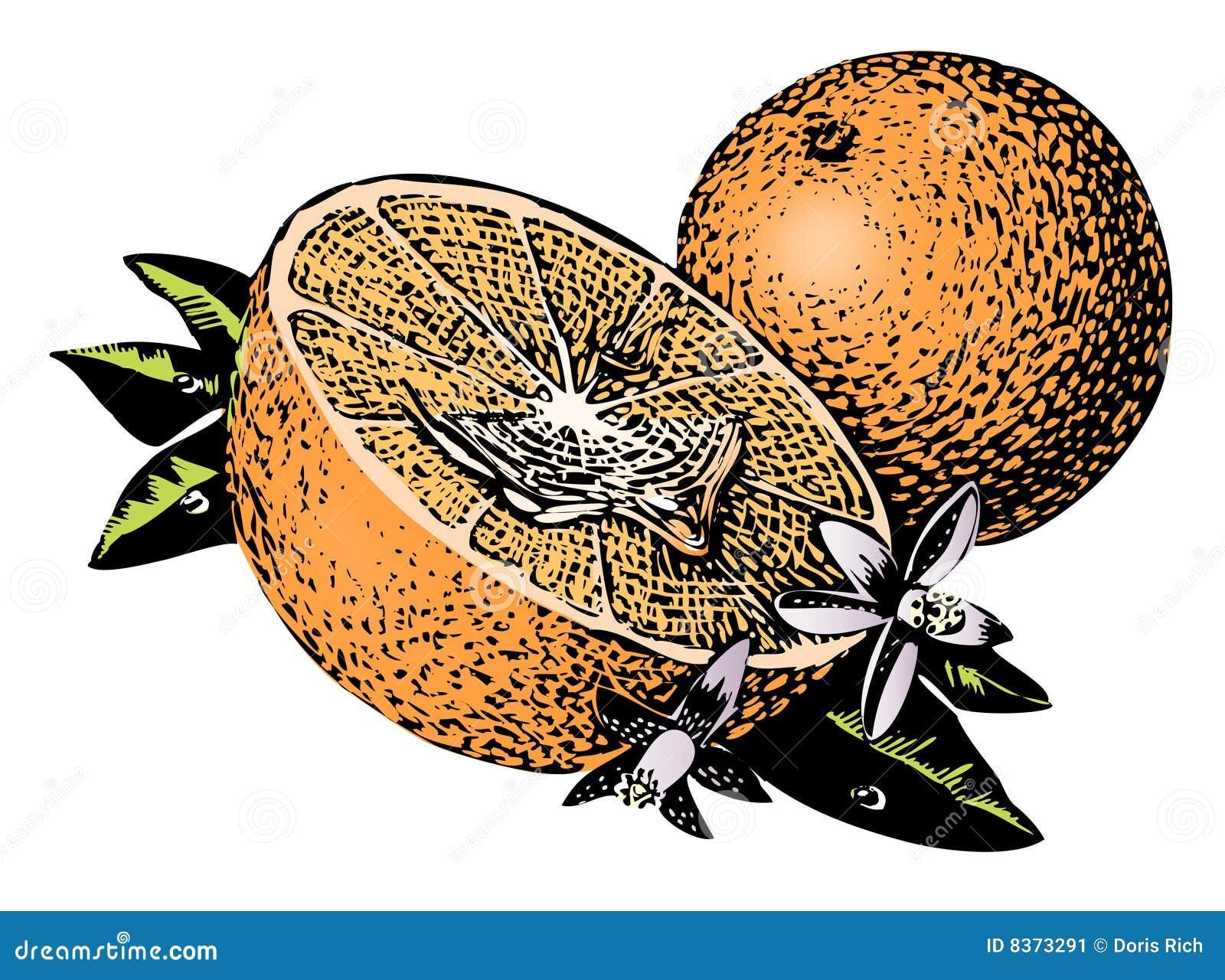 Vintage 1950s Oranges