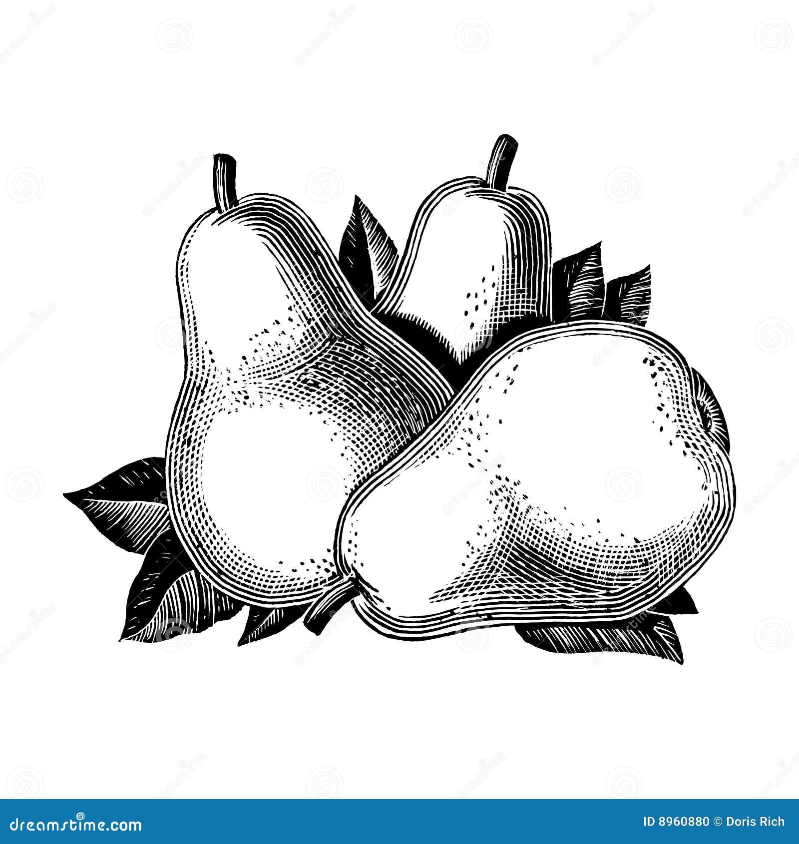 Vintage 1950s Pears
