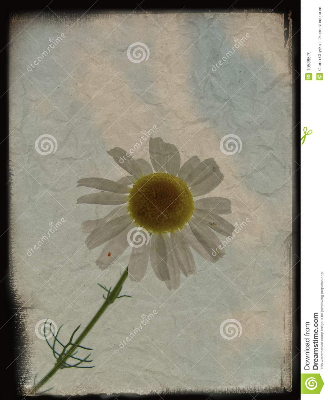 flower background with structure - photo #38