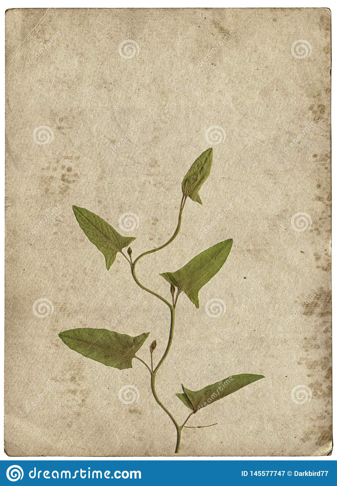 Vintage Background With Dry Plant On Paper Texture Stock Image Image Of Leaf Aged 145577747