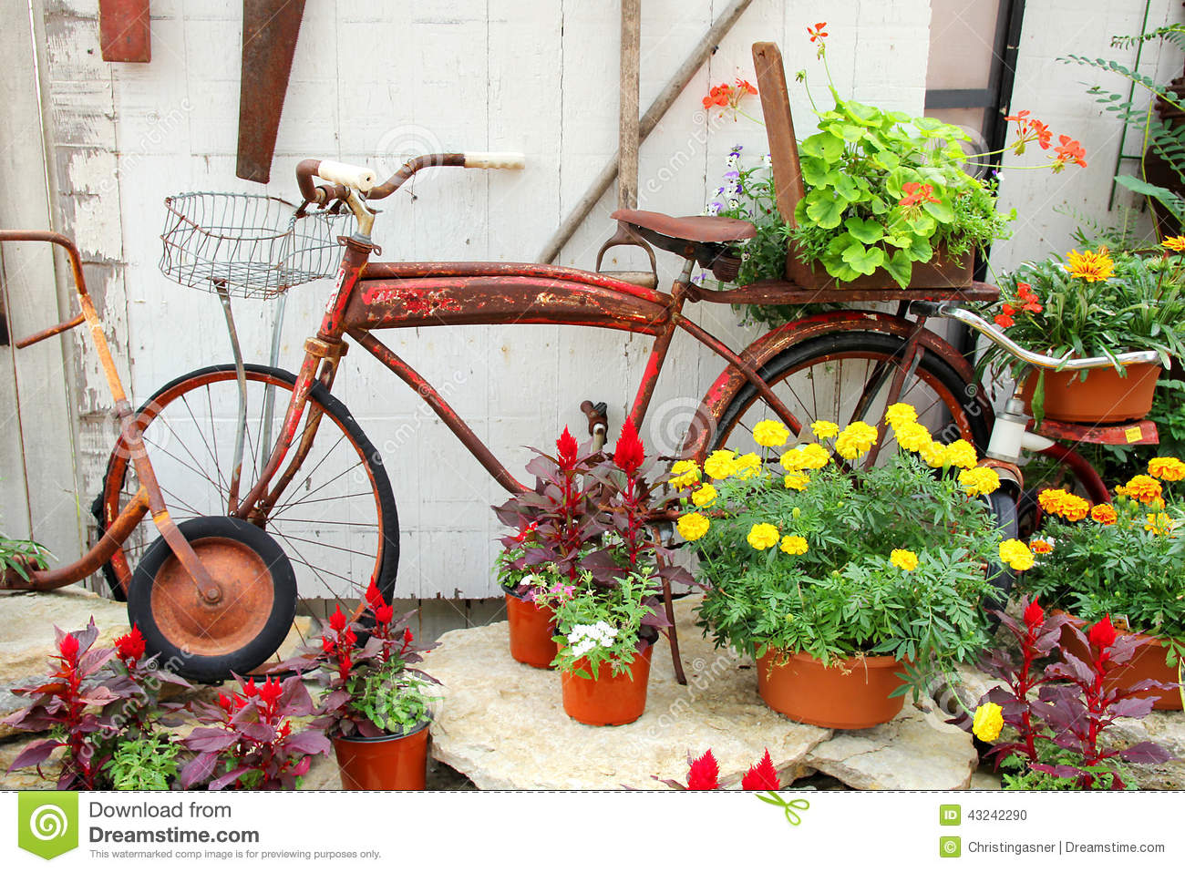 Vintage bicycle displayed in flower garden stock photo for Classic house with flower garden